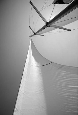 Catching The Wind Väggdekoration