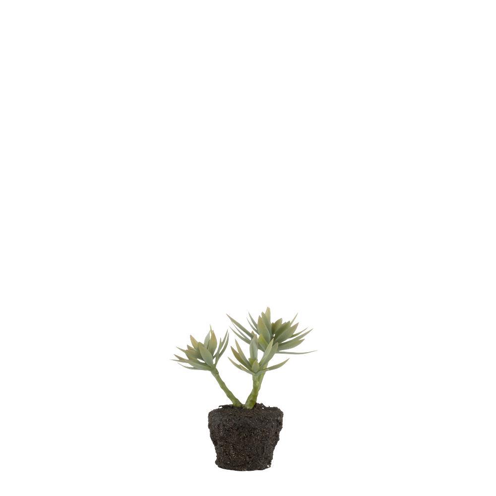 Flora succulent H16 cm