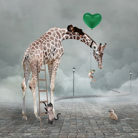 Lasten Juliste, Giraffe 30x40 cm
