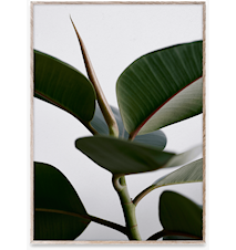 Green Home 02 Poster 30x40 cm