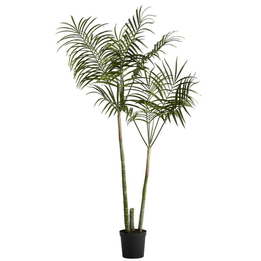 Flora kentia palm H185 cm