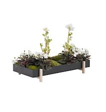 Botanic Blommlåda