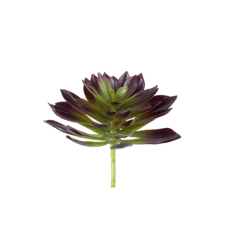 Flora succulent H20 cm