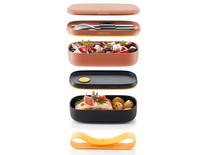 Lunchbox korall