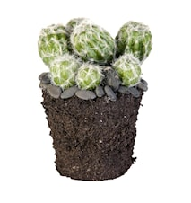 Flora cactus H17 cm