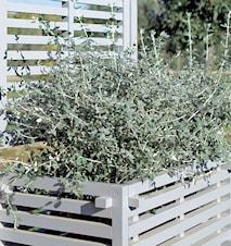 Oasi blomsterkasse 96x54 – Hvid