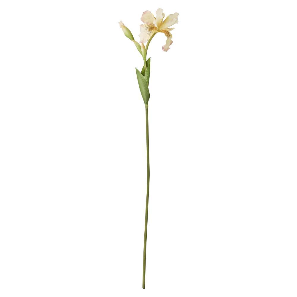 Flora iris H77 cm