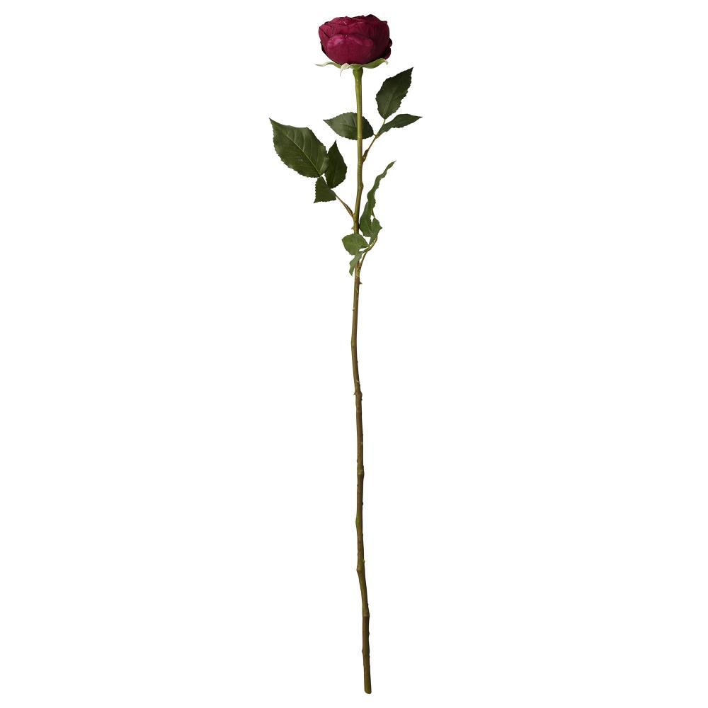 Flora rose H58 cm