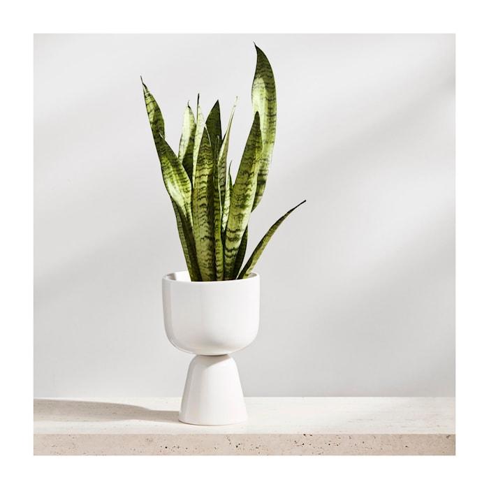 Nappula Pot Wit 23 cm