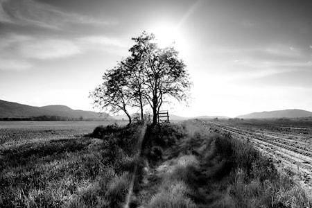 Landscape Tree Väggdekoration