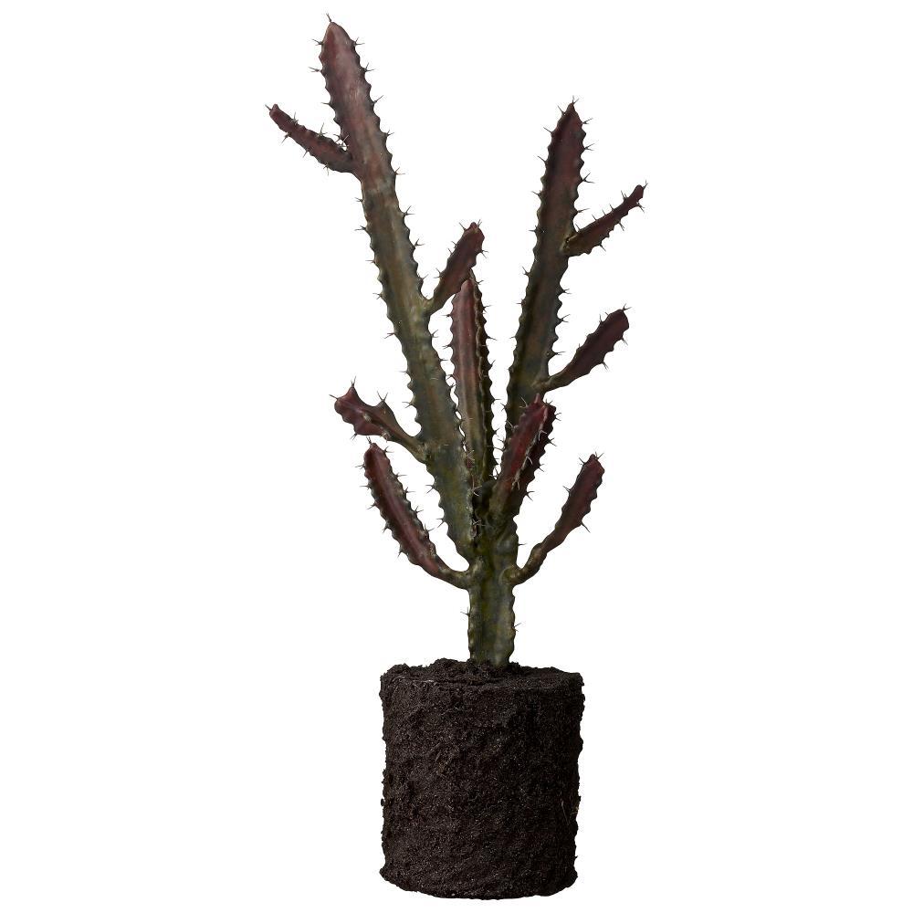 Flora cactus H54 cm