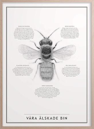 Våra älskade bin Poster 30x40 cm
