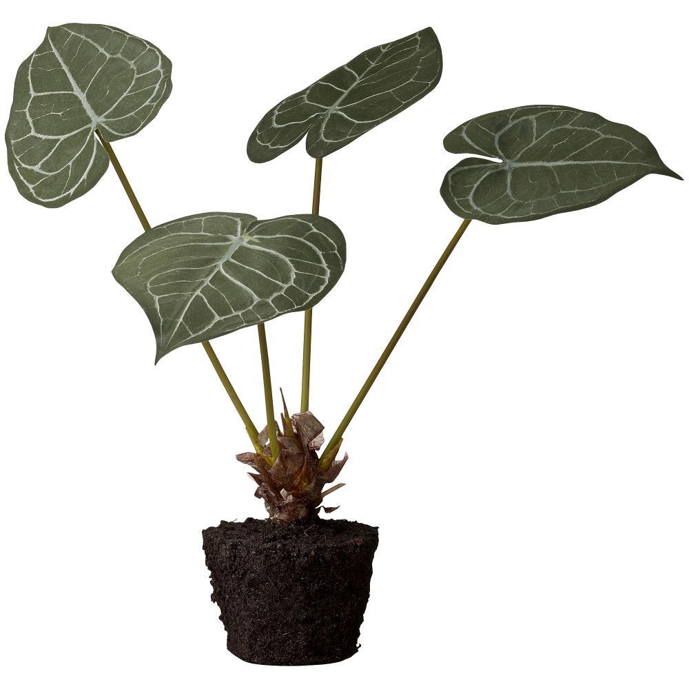 Flora taro H42 cm