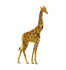 Väggdekoration Giraffe Yellow 50x96cm