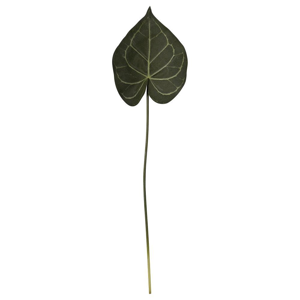 Flora taro H60 cm