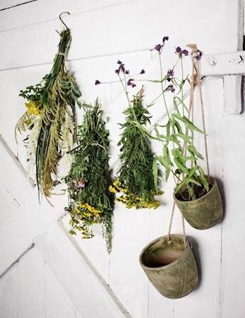 Kaufen Blumentopf Hangend O 17cm Grun Kitchentime