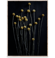 Still Life 01 (Yellow Drumsticks) Poster 30x40 cm