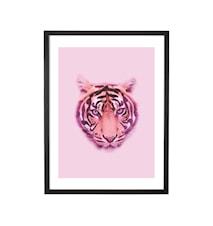 Poster Tiger med Ram Svart
