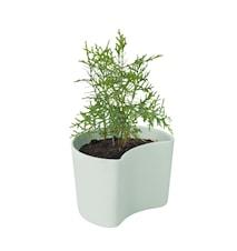Your Tree Kruka med frön Grön