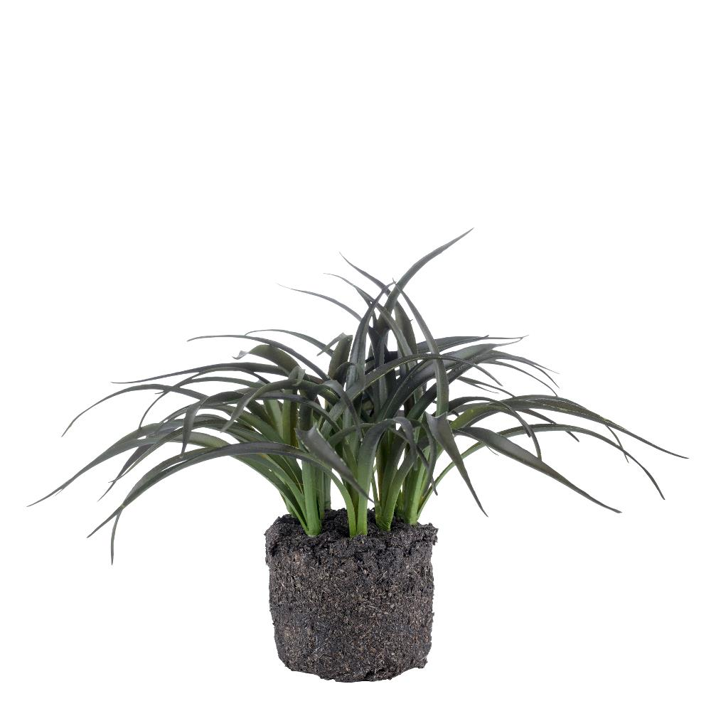 Flora air plant H15 cm