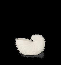 Shell Blomkruka Off-White