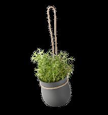 Grow-it Örtkruka Grå