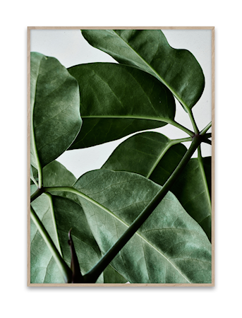 Green Home 01 Poster 50x70 cm