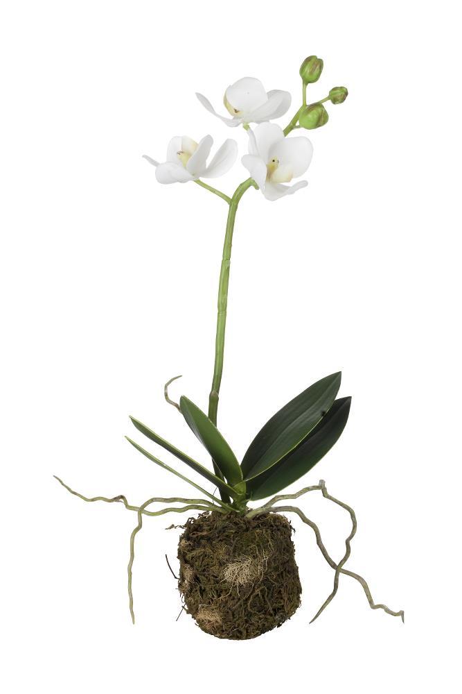 Flora orchid H31 cm