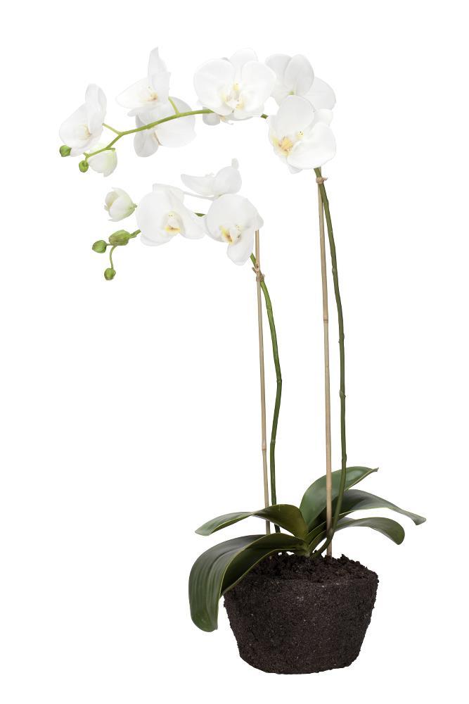 Flora orchid H76 cm
