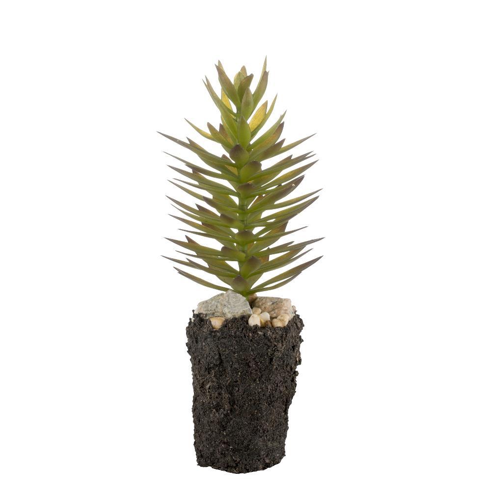 Flora succulent H28 cm