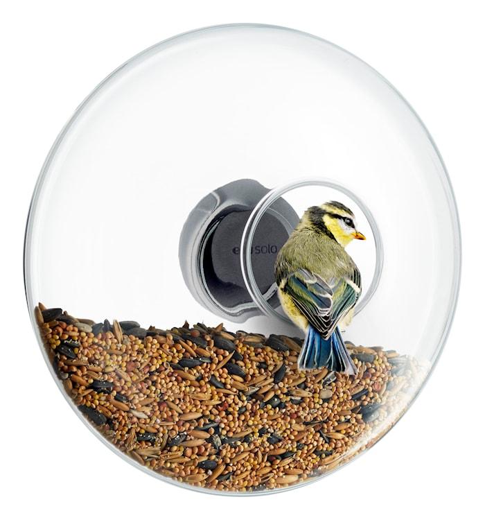Fönstermonterbar Fågelmatare Stor