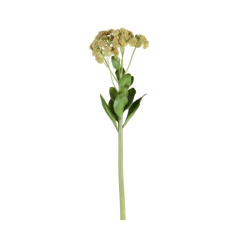 Flora sedum H60 cm