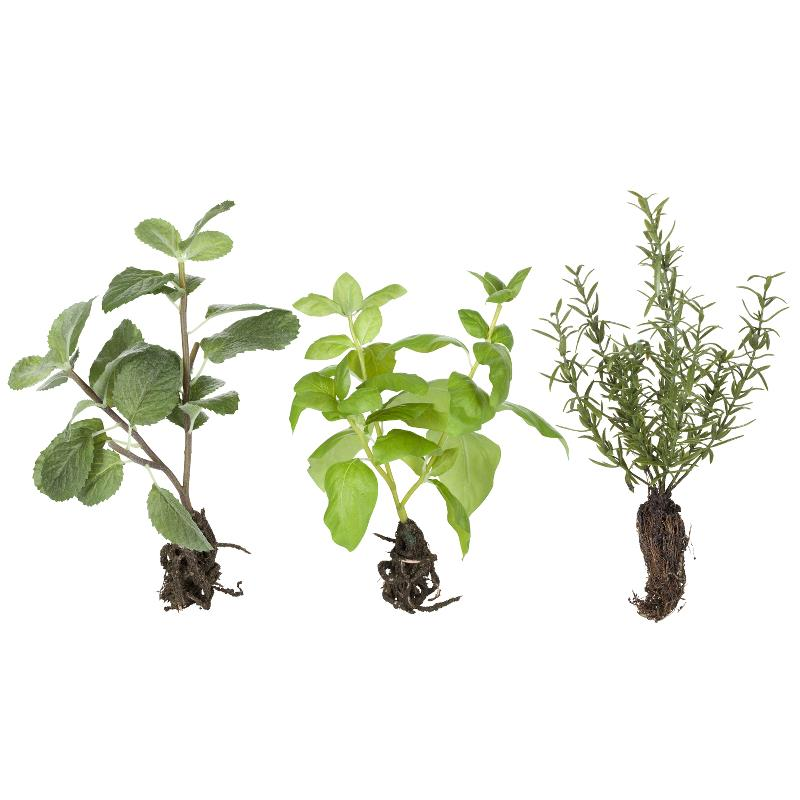 Flora herbs H24 cm