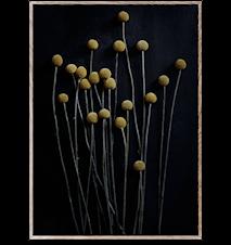 Still Life 01 (Yellow Drumsticks) Poster 50x70 cm