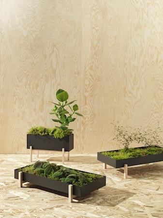 Botanic Krydderboks Svart/Ask