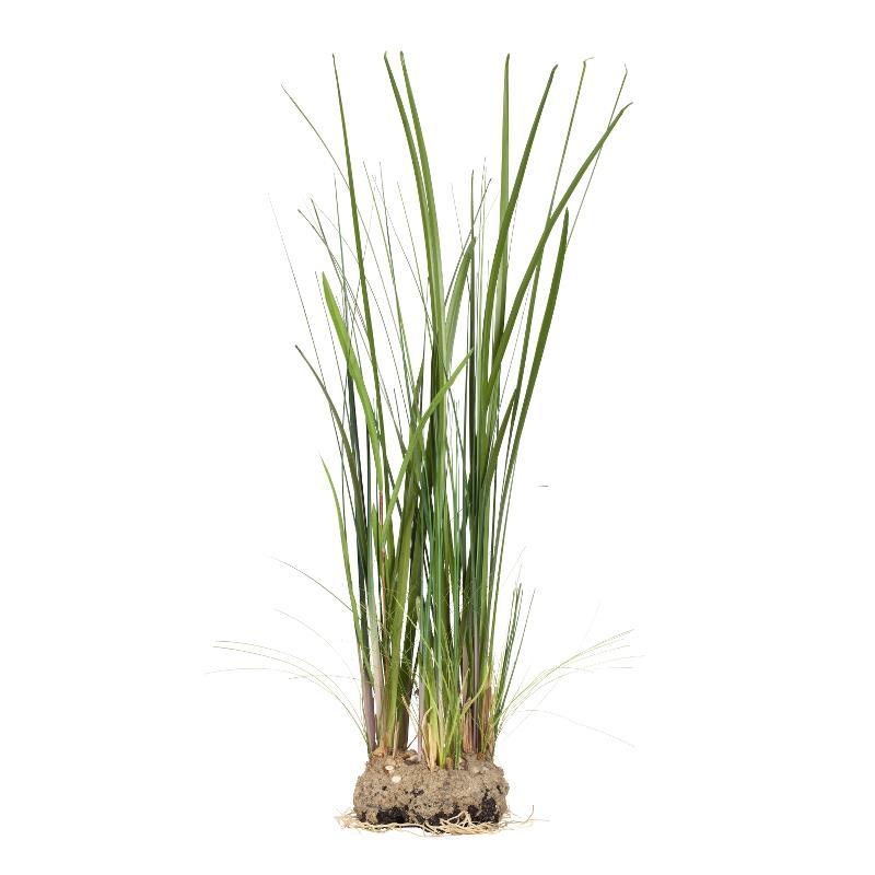 Flora grass H90 cm
