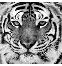 Tiger väggdekoration