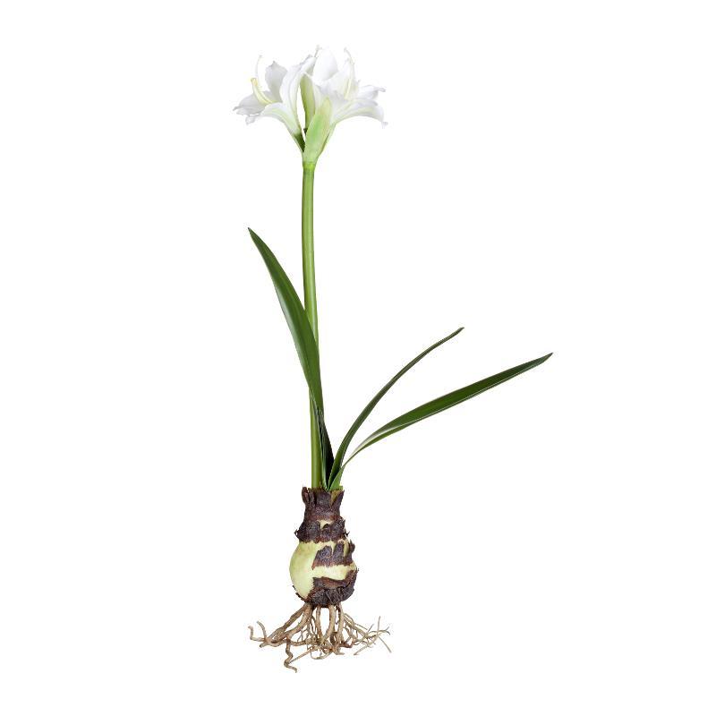 Flora amaryllis H55 cm