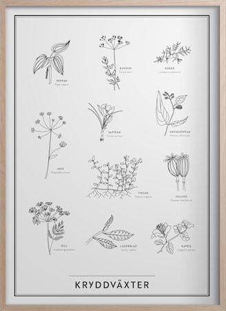 Kryddväxter Poster 30x40 cm