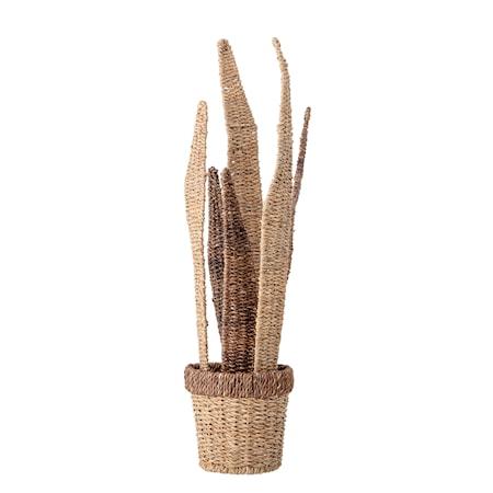 Deco Flower, Nature, Bankuan Grass