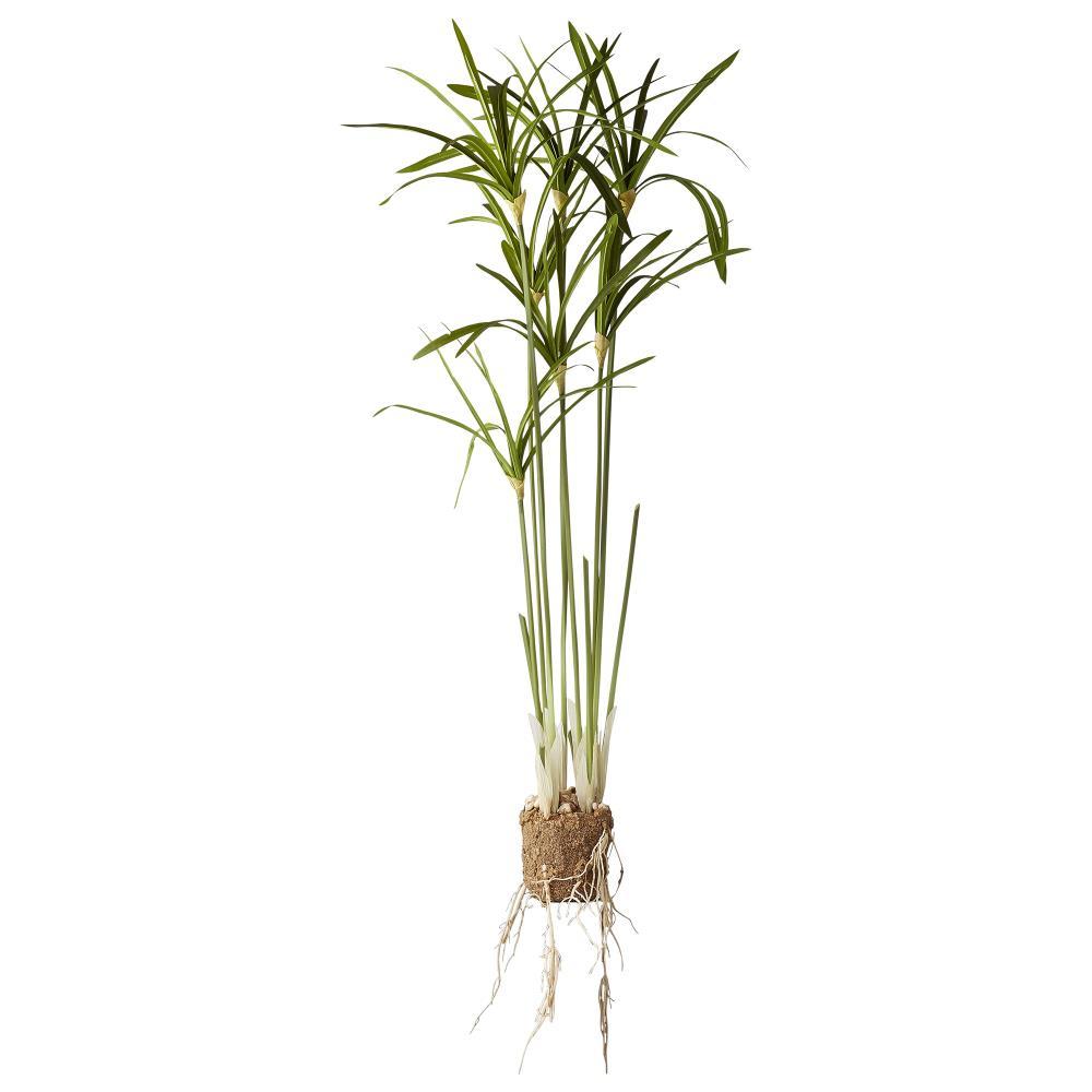 Flora papyrus H79 cm