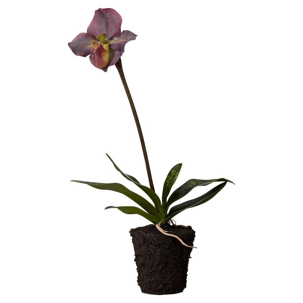 Flora orchid H51 cm
