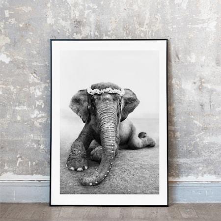 Sweetest Adele fotoprint - 70x100