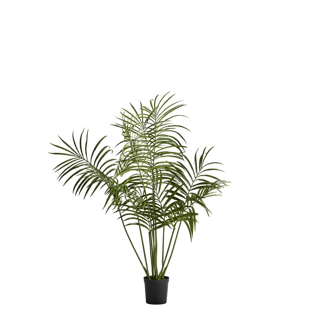 Flora kentia palm H130 cm